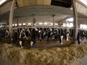 farm cctv picture